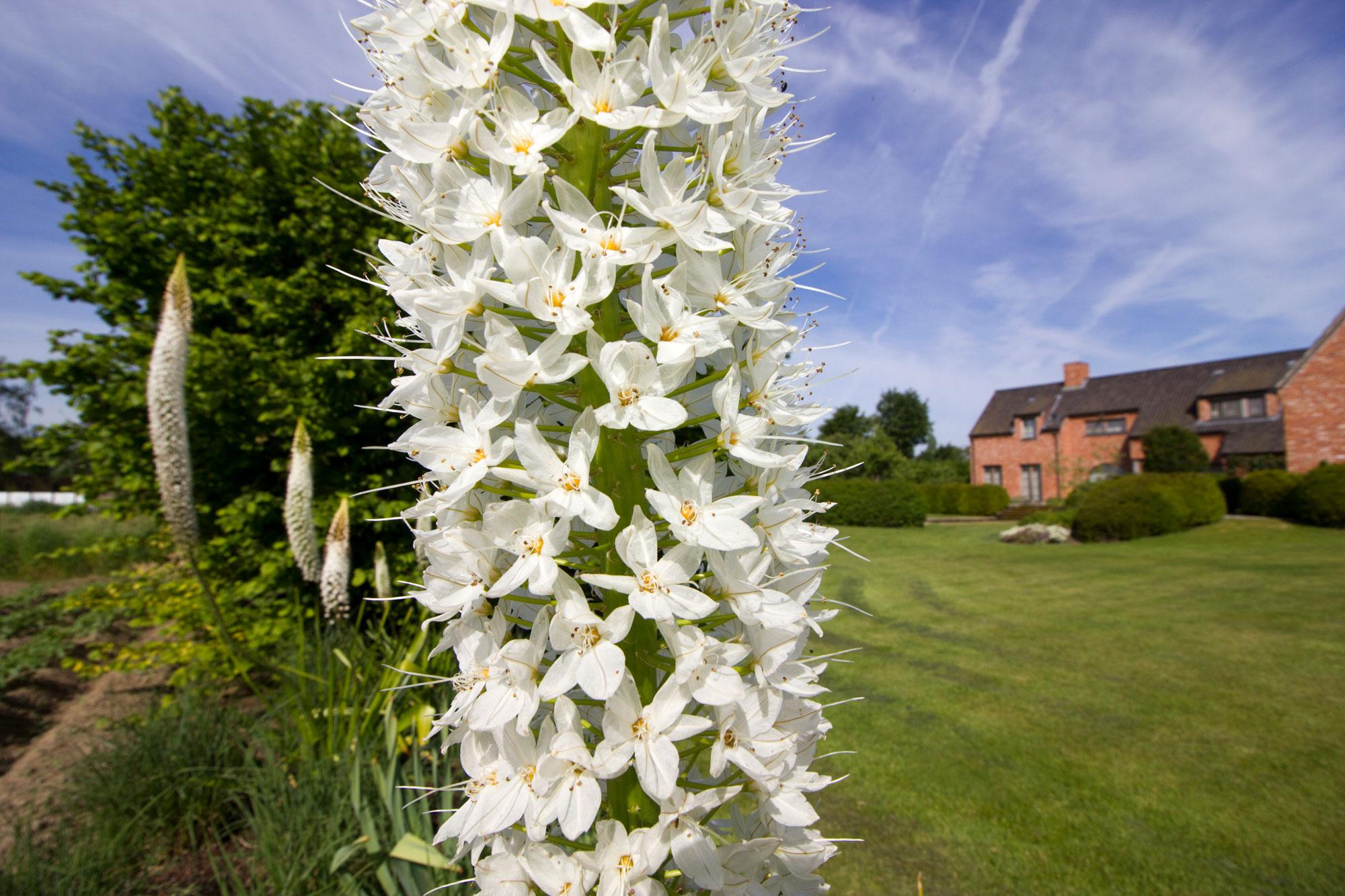 Close-up bloemen
