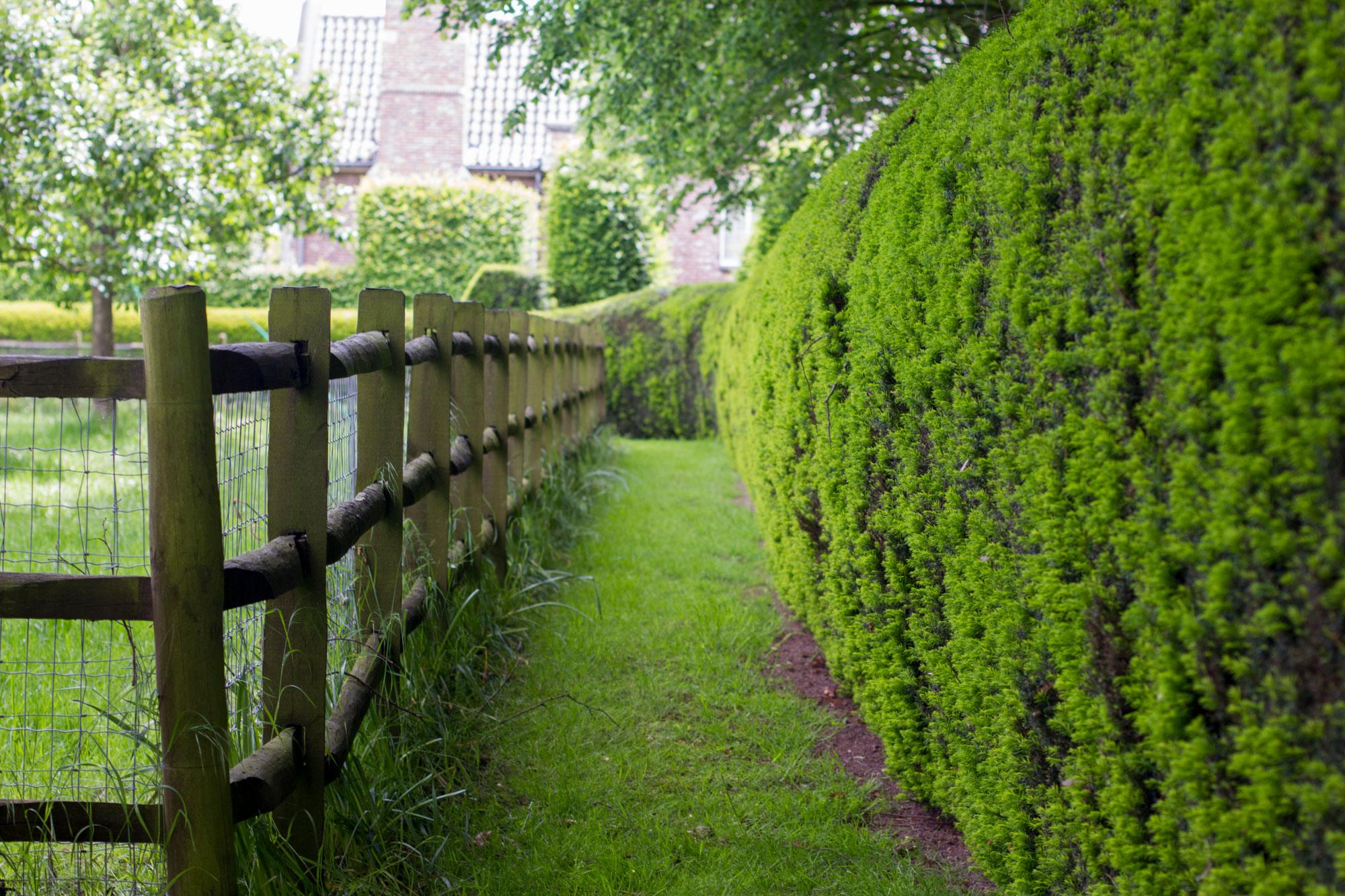 graspad tussen struik en hek